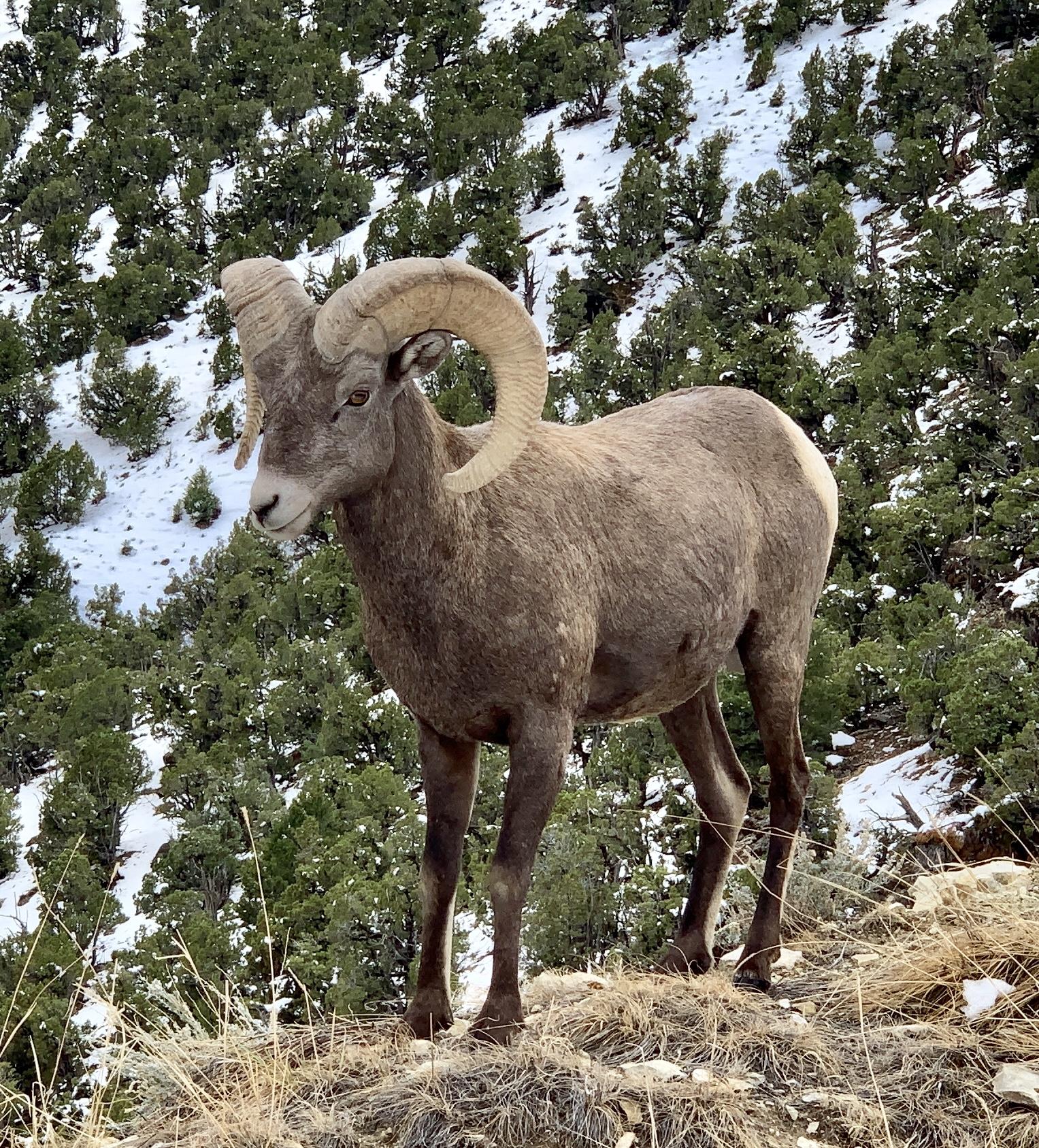Sheep Creek Canyon Geological Drive