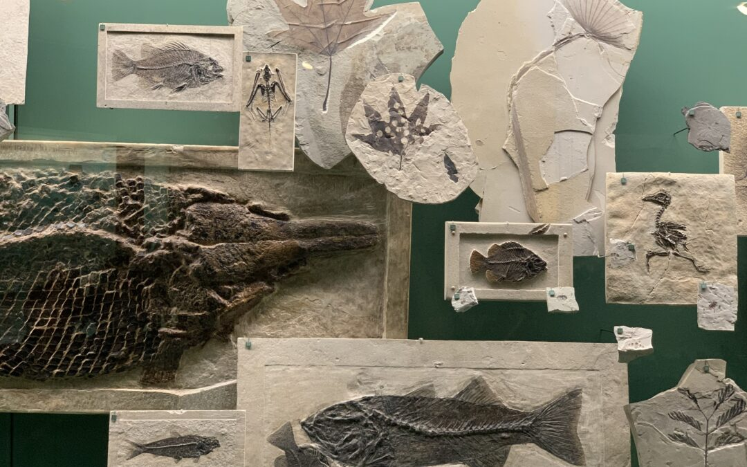 How Old are Fossils or Fossil Dating Methods